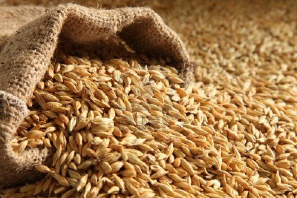 Organic Scottish Barley – Not Bruichladdich's Finest Hour